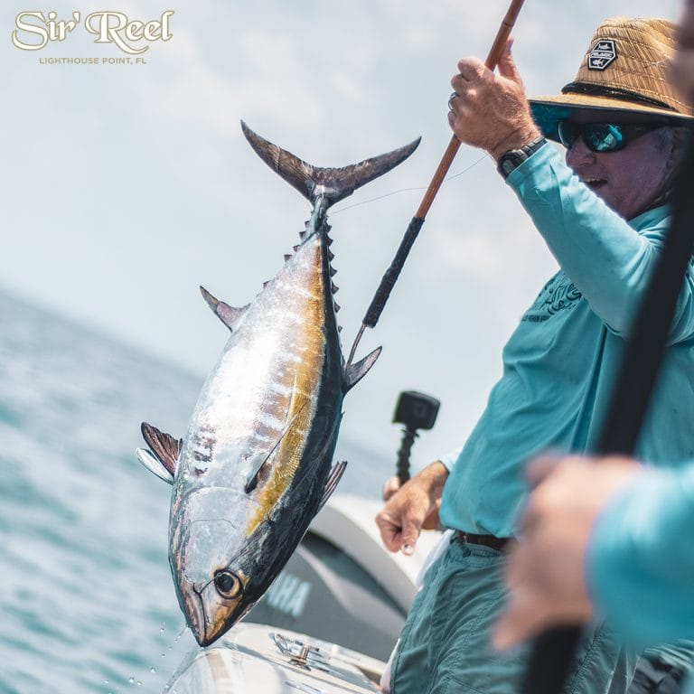 Blackfin Tuna Catch In Florida