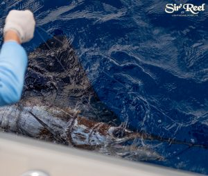 Sir'reel-fishing-team-sailfish-release