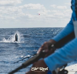 sailfish-jumping-at-JJfishweek-2019
