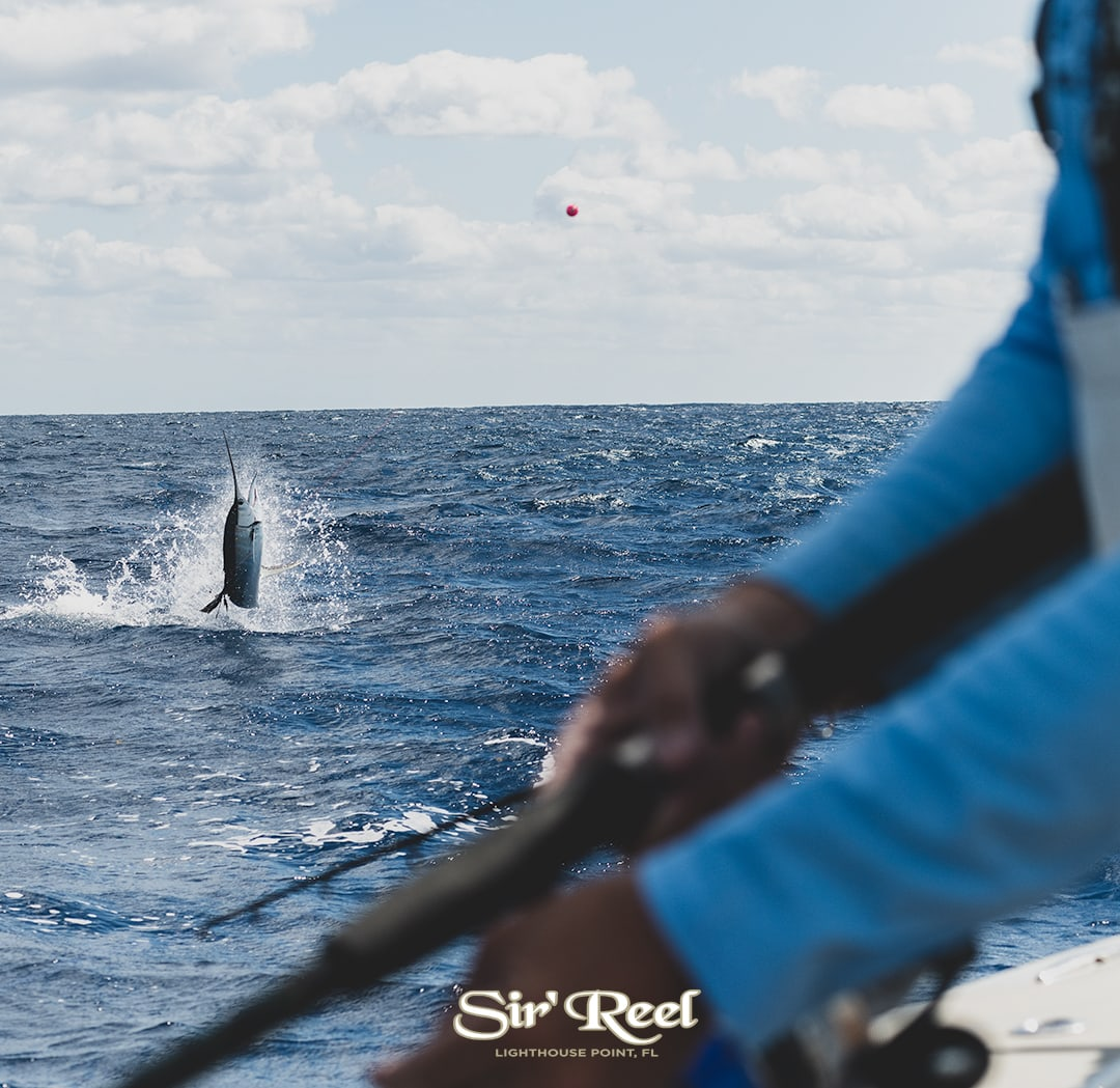 sailfish-jumping-at-JJfishweek-2019.jpg
