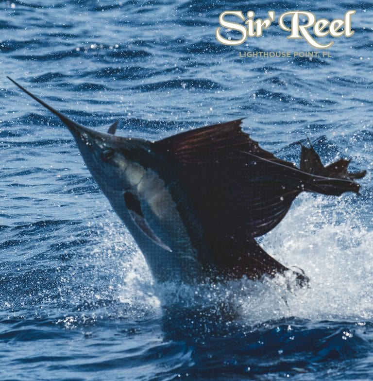 Sailfish Jumping During Bluewater Movements final Sail 2019
