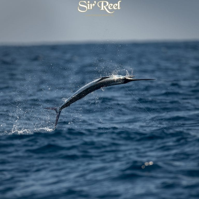 Fishing Picture With Sailfish Jumping