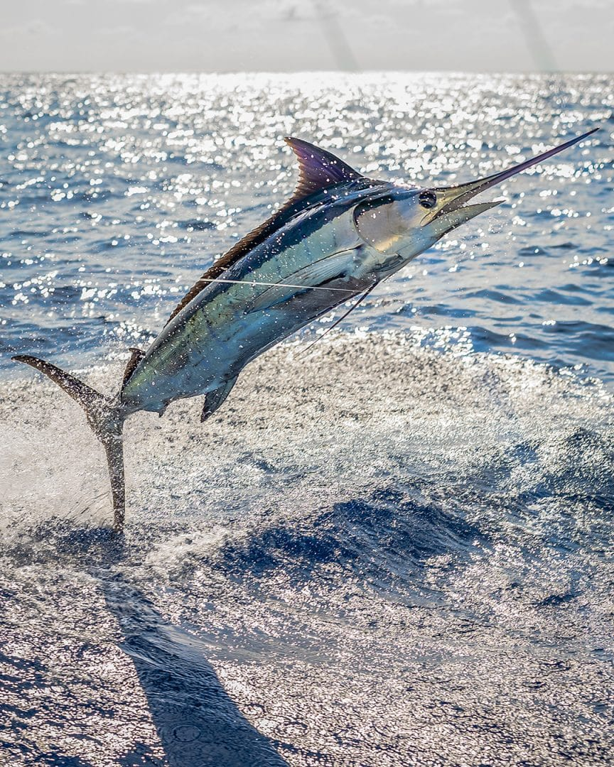 Los Suenos Triple Crown Fishing Tournament